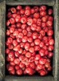 Granelli di pepe rosa Fotografia Stock