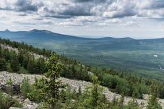 Granen växer på en solig dag för backe Mot bakgrunden kan en se bergen buskar fördunklar gröna horisontaltrees för sommar för lig Arkivbilder