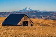 Granero abandonado en el campo de trigo Fotografía de archivo libre de regalías
