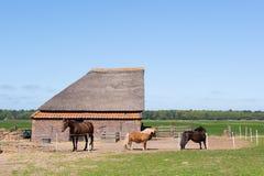 Granero animal típico en Holanda Fotografía de archivo