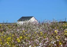 Granero blanco viejo en un campo de wildflowers, CA Imagen de archivo