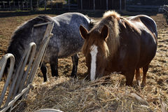 Granero de caballo Foto de archivo