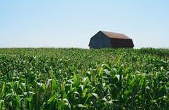 Granero de madera en campo de maíz verde Fotos de archivo
