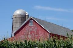 Granero en campo de maíz Imagenes de archivo