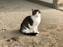 Granero Kitty Imagen de archivo libre de regalías
