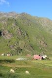 Granero, ovejas y montañas de Uttakleiv Fotos de archivo