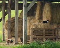 Granero rústico del heno Foto de archivo libre de regalías