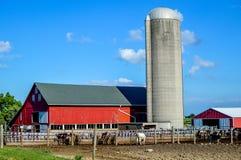 Granero rojo con Silo y las vacas lecheras fotografía de archivo libre de regalías