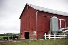 Granero rojo de la granja con las vacas Fotos de archivo libres de regalías