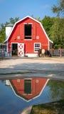 Granero rojo reflejado en charco de la lluvia fotografía de archivo