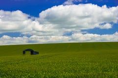 Granero solitario en un campo de maíz Foto de archivo libre de regalías