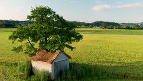 Granero viejo con el tejado dañado, derrumbado debajo de un árbol grande en paisaje rural almacen de metraje de vídeo