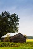 Granero viejo debajo del árbol de abedul Foto de archivo