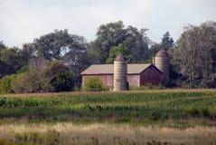 Granero viejo en campo de maíz Fotografía de archivo