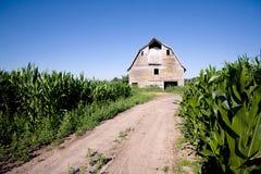 Granero viejo en el campo de maíz Foto de archivo
