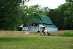 Granero y caballos Imagen de archivo