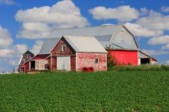 Graneros rojos Imagen de archivo libre de regalías