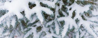 Granfilial som täckas tungt med ny snö på ren vit bakgrund royaltyfri fotografi
