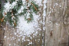 Granfilialer i snowen Royaltyfria Foton