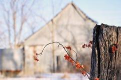 Grange aigre-douce photographie stock libre de droits