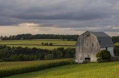 Grange blanche avec la zone de maïs image stock