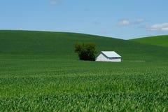 Grange dans le domaine de blé photographie stock libre de droits