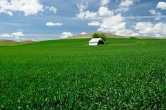 Grange dans le domaine de blé images libres de droits