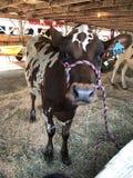 Grange de bétail à la foire Images libres de droits