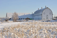 Grange de laiterie historique au gisement de la crémeuse en hiver Photos stock