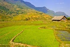 Grange en bois dans des collectes de riz photographie stock libre de droits