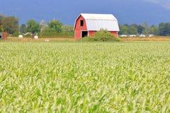 Grange et champ de maïs de passe-temps à la ferme photo libre de droits