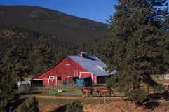 Grange et chevaux rouges de pays du Colorado Photographie stock libre de droits