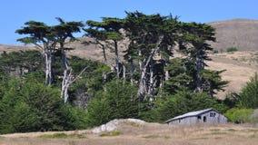Grange et cyprès délabrés Image libre de droits