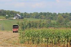 Grange et maïs Photo stock