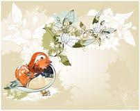 Grange mandarin duck Stock Image
