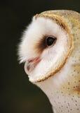 Grange rêveuse Owl Portrait images libres de droits