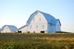 Granges blanches au crépuscule dans le Midwest, Etats-Unis photos libres de droits