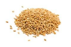Grani del grano isolati su fondo bianco Fotografia Stock