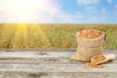 Grani del grano saraceno e giacimento del grano saraceno Fotografia Stock