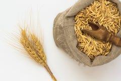 Grani dell'avena in borsa Cucchiaio di legno Orzo del ramoscello Fotografie Stock Libere da Diritti