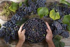 Grani dell'uva nera Fotografia Stock Libera da Diritti