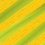 Grani di cereale con il primo piano della gocciolina di acqua Fotografie Stock Libere da Diritti