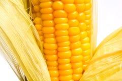 Grani di cereale maturo Fotografie Stock Libere da Diritti