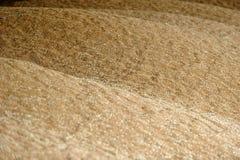 Grani di grano nell'immagine di struttura di agricoltura di vista del primo piano Immagini Stock Libere da Diritti