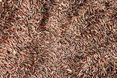 Grani organici porpora del riso Fotografie Stock