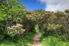 Grani rododendronowy Tunelowy Błękitny Parkway Obraz Stock