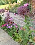 Granic rośliny wzdłuż ścieżki i kwiaty Obrazy Royalty Free