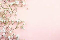 Granica delikatni mali biali kwiaty na różowym tle od Obrazy Royalty Free
