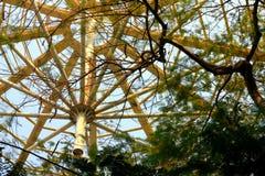 Granica duży drzewo Obrazy Royalty Free