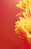 granica kwiaty Obraz Stock